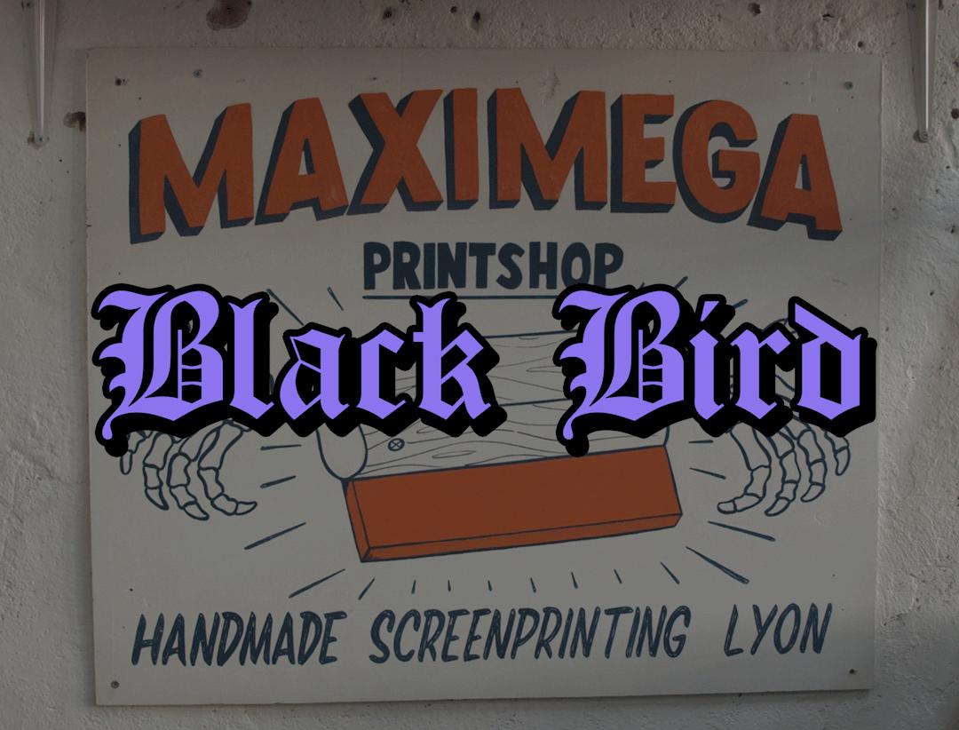 Shooting vidéo Blackbird